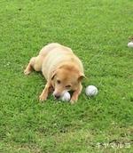 ボールへの執念・・・